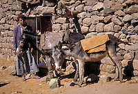 An Arabic boy stands with his donkeys outside of a stone house. Bani Mans, Yemen.
