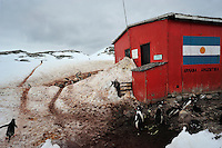 Penguin Roads & Home - Penguins nesting at an abandoned Argintiean station on Peterman Island.