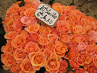 Peach rose bouquets, Provence