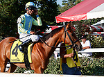 Gunslinger in the post parade as Opry (no. 8) wins the With Anticipation  Stakes (Grade 3), Aug. 29, 2018 at the Saratoga Race Course, Saratoga Springs, NY.  Ridden by  Javier Castellano, and trained by Todd Pletcher, Opry finished 1 1/2 lengths in front of Somelikeithotbrown (No. 7).  (Bruce Dudek/Eclipse Sportswire)