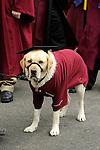 Therapy dog at graduation.
