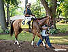 Gamay Noir before The Delaware Handicap (gr 1) at Delaware Park on 7/12/14