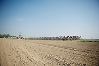 peloton cruising in typical dutch landscape (= flat)<br /> <br /> Amstel Gold Race 2014