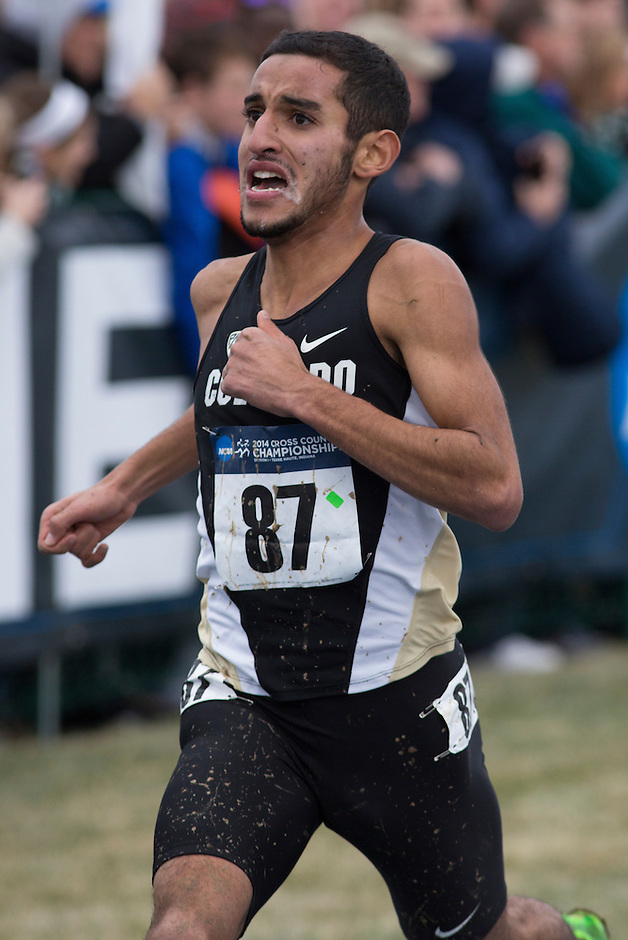 Colorado's Ammar Moussa (87) runs to the finish during the NCAA Cross Country Championships in Terre Haute, Ind. on Saturday, Nov. 22, 2014. (James Brosher, Special to the Denver Post)