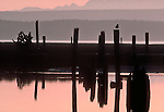 Skagit River Estuary, Puget Sound, Olympic Mountains, Washington State, Skagit County, Washington State Fish Wildlife, Washington Wildlife and Recreation Program, South Fork slough, old log raft pilings,.