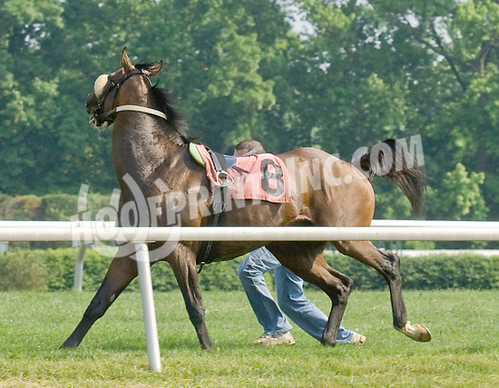 Slip and Drive caught by his groom at Delaware Park on 5/28/12
