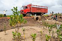 KENYA , Mombasa , road construction near Jimbo, Mangrove reafforestation / KENIA Jimbo, Bau einer Strasse, Vordergrund Mangroven Anpflanzung als Kuestenschutzmassnahme