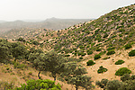 Mediterranean forest and maquis shrubland, Sierra de Andujar Natural Park, Sierra de Andujar, Sierra Morena, Andalusia, Spain