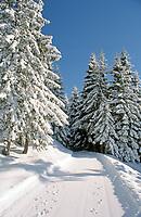 Oesterreich, Salzburger Land, Winterwanderweg bei Dienten am Hochkoenig | Austria, Salzburger Land, Winter Hiking Trail near Dienten at Hochkoenig mountain