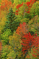 399-80 Fall Foliage in the Monttreal River Gorge, Ontario, Canada