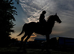 BALTIMORE, MD - MAY 15: A horse heads back from the training during training hours on Preakness Week at Pimlico Race Course on May 15, 2018 in Baltimore, Maryland (Photo by Scott Serio/Eclipse Sportswire/Getty Images)