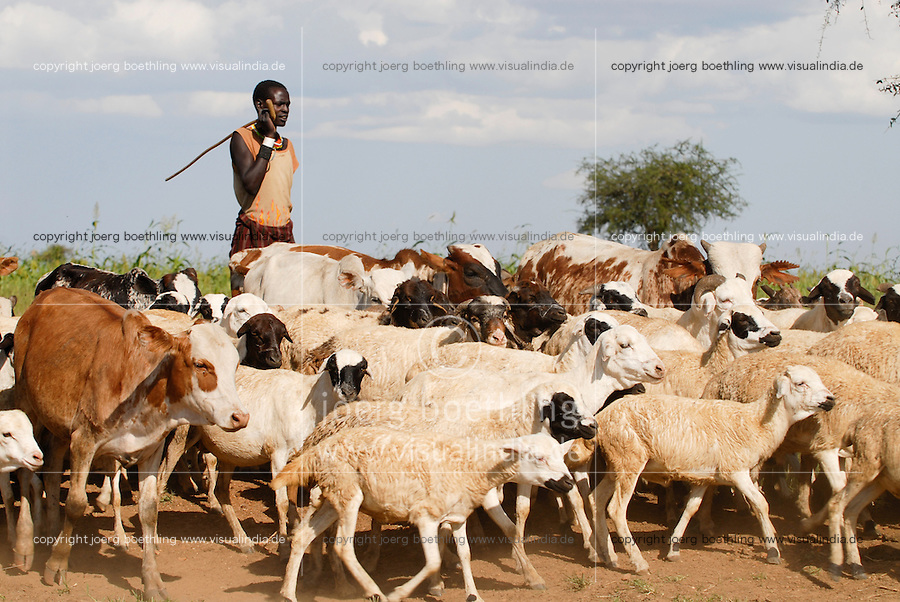 Afrika Uganda Karamoja , Volk der Karimojong , Hirten mit Herde auf Suche nach Wasser und Futter -  Nomaden Halbnomaden ethnische Gruppe Afrikaner Indigene Voelker afrikanisch / Africa Uganda Karamoja , Karimojong a pastoral tribe , shephard with livestock searching for water and fodder -  indigenous people
