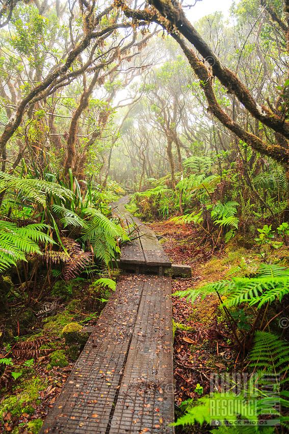 Mist surrounds the boardwalk of the Alaka'i Swamp Trail in Koke'e State Park, Kaua'i.