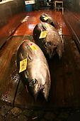 Mar 4, 2006; Tokyo, JPN; Tsukiji.Fresh tuna for sale at the Tsukiji Fish Market...Photo credit: Darrell Miho