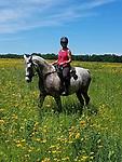 horses Elk River 41
