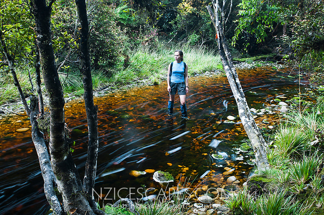 Female tramper crossing a bush creek on Saltwater Lagoon track - Westland National Park, West Coast, New Zealand