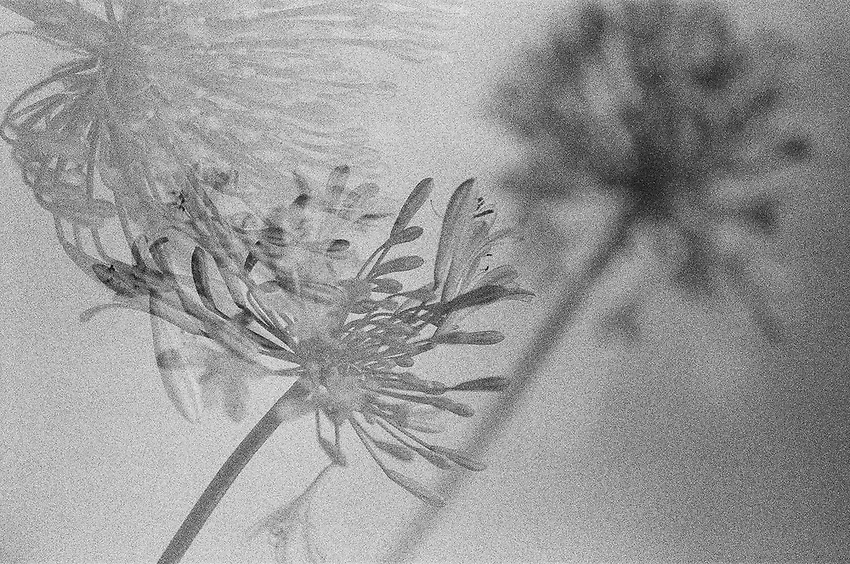 Flowers Double Exposure, Ilford Delta Film