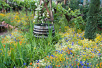 Rain barrel in flower garden of American natives, climbing white roses, lush blue and orange and yellow and white flowers, grape vines, house