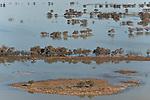 Aerial - Flooded Strzelecki Desert approaching Coongie Lakes National Park