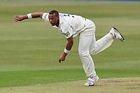 Cricket 2011-03