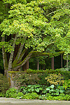 A tall, moss-covered tree arches gracefully over a stone wall and lush border.