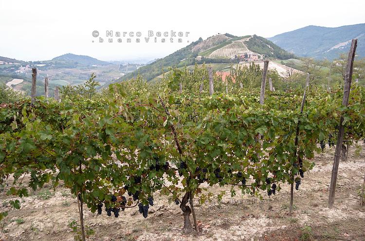 Oltrepò Pavese, vigneti presso Schizzola frazione di Borgo Priolo (Pavia) --- Vineyards near Schizzola Borgo Priolo (Pavia) in the Oltrepò Pavese