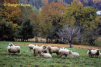 SH01-001z  Sheep - herd