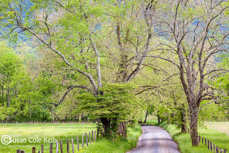 Sparks Lane in Cades Cove, Great Smoky Mountains National Park, Tennesee, USA