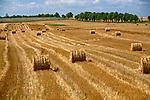 Mazurski krajobraz, pola po żniwach - okolice Węgorzewa.