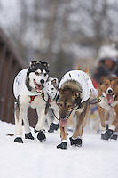 Saturday March 6 , 2010   Sebastian Schnuelle and team cross a bridge along the trail during the ceremonial start of the 2010 Iditarod in Anchorage , Alaska