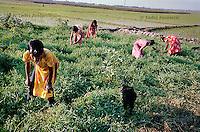 Fourth grade students from a boat school work in a field behind their village of Kalinagar. Because the boat school comes to their village they can now divide time between helping their families, studying and playing. Traditionally, girls can go to school only if the facility is not too far from home. Sending girls to distant schools would take away too many hours they could spend supporting their families by working in and around the house. (Photo by Tadej Znidarcic)