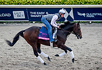January 23, 2020: Omaha Beach gallops on the main track as horses prepare for the Pegasus World Cup Invitational at Gulfstream Park Race Track in Hallandale Beach, Florida. John Voorhees/Eclipse Sportswire/CSM