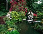Kubota Garden, Seattle, WA<br /> Flowering rhododendrons and azaleas around pond and stone bridge in the Kubota Japanese Gardens