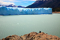 A lone hiker reflects on the immense Glacier Perito Moreno in Parque Nacionales los Glaciares, Argentina.