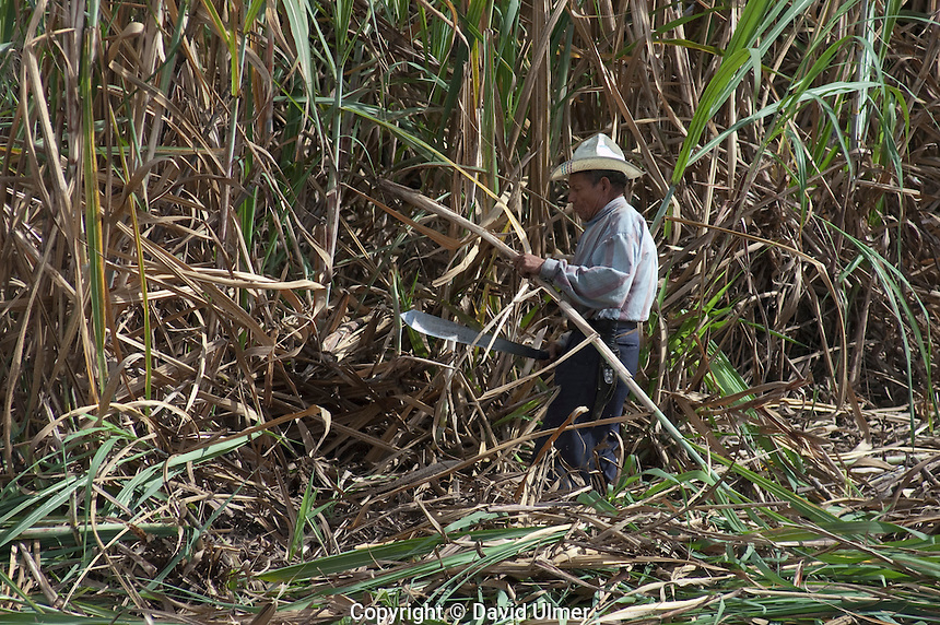 Cutting sugar cane, Costa Rica