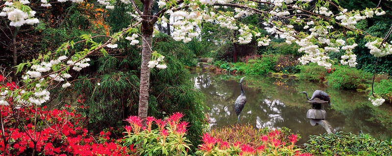 Spring flowers and pond at Shore Acres State Park, Oregon.