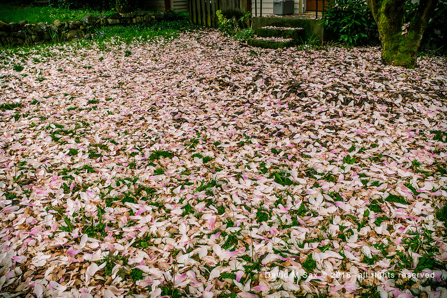 4.13.18 - Petal Carpet...