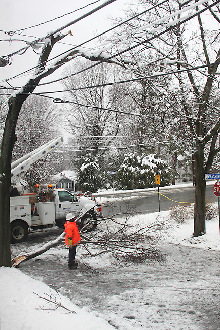 Tree branch down across street in snow.