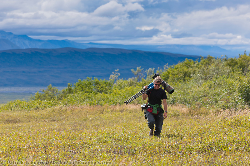 Hugh Rose walks across the open tundra vegetation of dwarf birch, willows and alders in Denali National Park, Interior, Alaska.