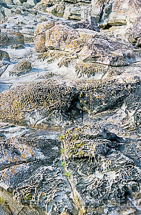 Honeycomb weathering of beach rocks, Broughton Island, off coast of New South Wales
