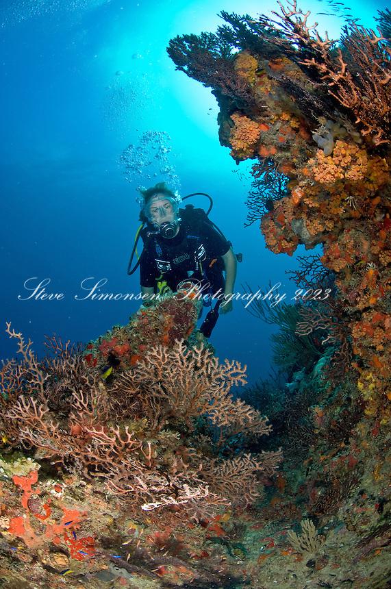 Scuba diver on the reef<br /> Congo Cay<br /> US Virgin Islands