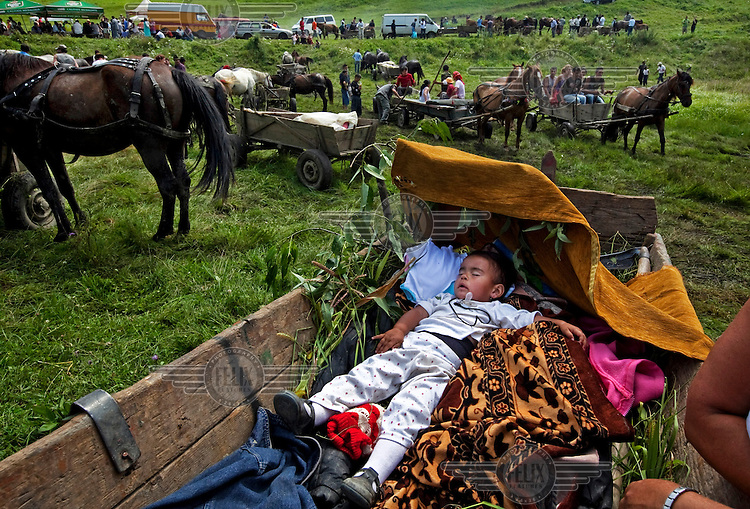 A baby sleeps in a cart during a Roma horse market.