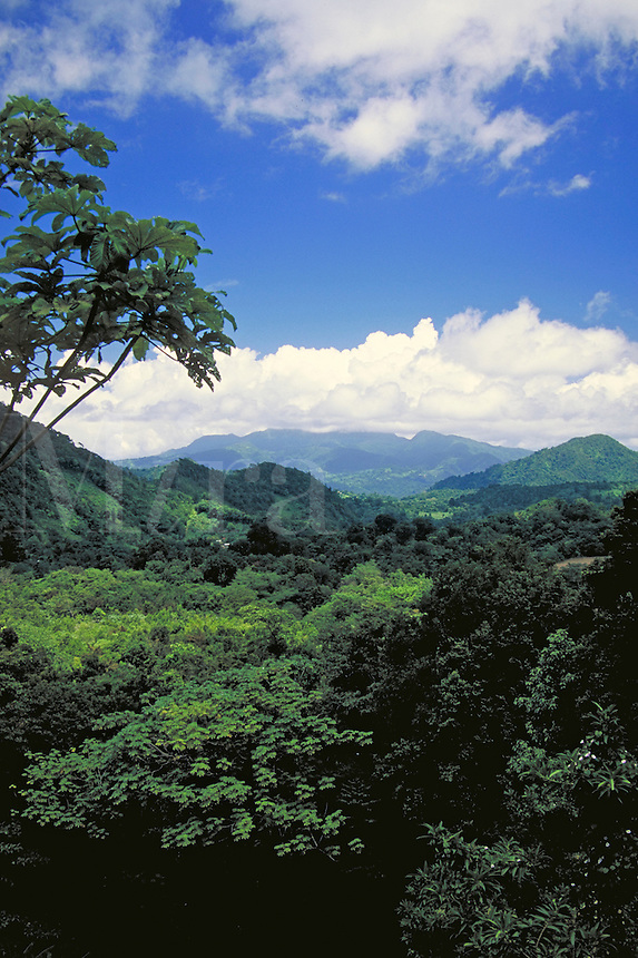 Layou Valley, island of Dominica , West Indies. Layou Valley, Dominica West Indies.