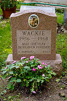 Gravestone for Wackie the German Shepherd at the Hartsdale Pet Cemetery in New York