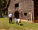 July 31, 2017. Chapel Hill, North Carolina.<br /> <br /> Don Basnight leads Rameses the Ram back to the barn where he lives. <br /> <br /> Basnight is one of the members of the Hogan family who have long been the caretakers of Rameses the Ram. The current Rameses is the 21st in the line of the University of North Carolina's live mascot.