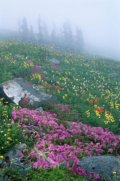 Wildflowers (mostly penstemon, golden pea, paintbrush & bistort), Cascade Mts., WA