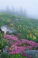 Wildflowers (mostly penstemon, golden pea, paintbrush & bistort), Cascade Mts., WA