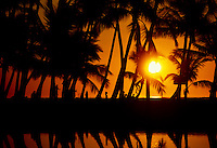 Sunset in palm grove. Anaehoomalu Bay. Kona Coast, Hawaii