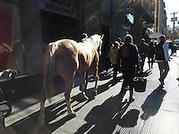 """A horse is walked around the Union Square neighborhood of New York as part of a promotion for the film """"Unbridled"""", seen on Saturday, November 19, 2016. """"Unbridled"""" is about a faith-based healing ranch, Corral, in North Carolina, for troubled teen girls. (© Richard B. Levine)"""