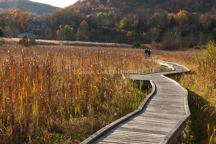 Twists & turns of life showing Boardwalk thru Cattail Meadow for hiking in fall with couple in distance, lovely golden light, on Appalachian Trail, NJ, life's path and journey